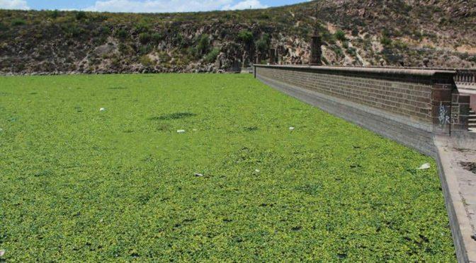 San Luis Potosí: Interapas se prepara para frenar estiaje y bajo nivel de presas (El Universal)