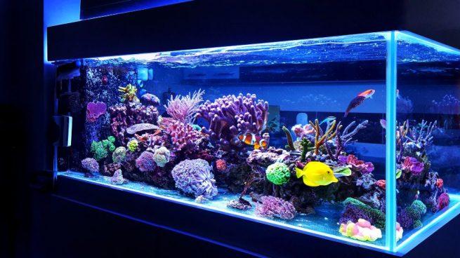 Los tipos de agua ideales para tu acuario en casa (OkDiario)