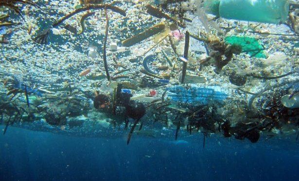Hallan plásticos en pescados desde BCS hasta Veracruz (La jornada)