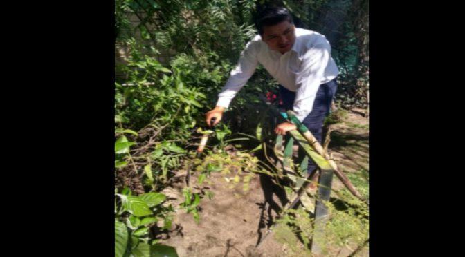 Puebla: Girasoles contra la contaminación en Tehuacán por las aguas negras (Diario puntual)
