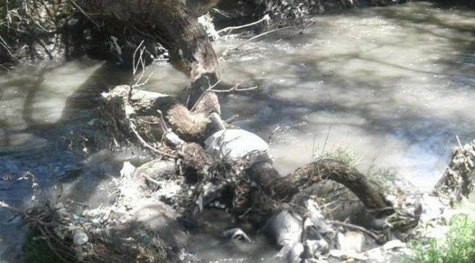 Puebla: Basura y descargas de empresas contaminan río en Tlanalapan (Municipios)