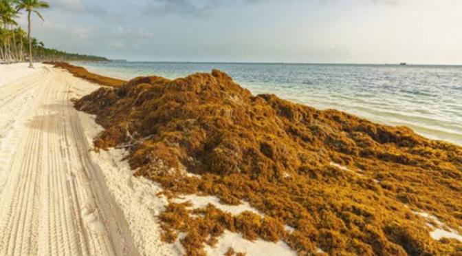 Sargazo: Quintana Roo pide frenarlo con los ingresos por DNR (Reportur)