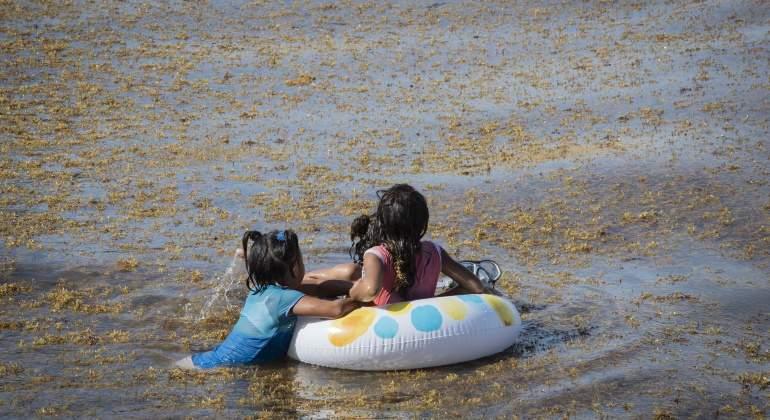 El sargazo provoca grave contaminación en las playas, afirman (Economiahoy.mx)