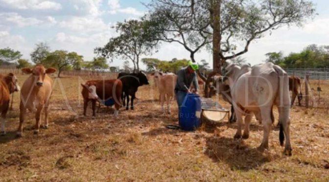 Veracruz: Agricultores y ganaderos de Tuxpan toman como burla apoyos federales y estatales (Vanguardia)