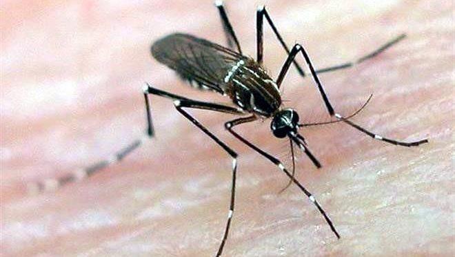 Nayarit: Fundamental el saneamiento básico contra el dengue y chicongunya (NNC.MX)