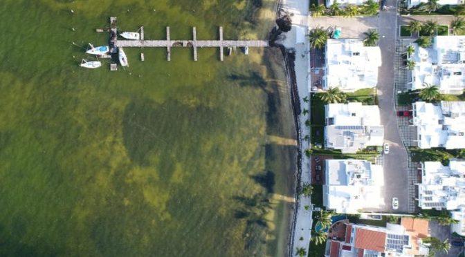 Quintana Roo: Desarrollo costero entre Cancún y Tulum deteriora arrecifes (Novedades Quintana Roo)