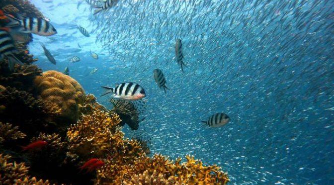 México: Los peces escapan al fondo del océano por el cambio climático (El País)