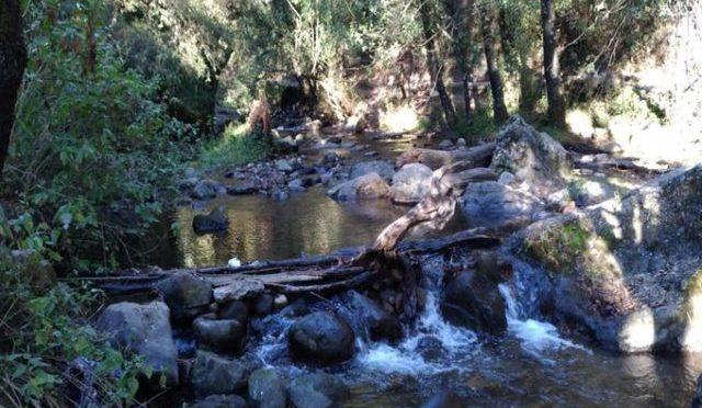 En peligro el último río vivo de la CDMX (Diario Basta)