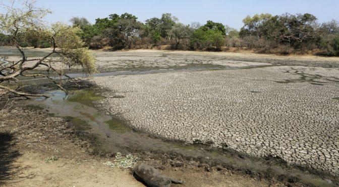 California: Reservas de agua en San Diego están a menos de la mitad (Telemundo)