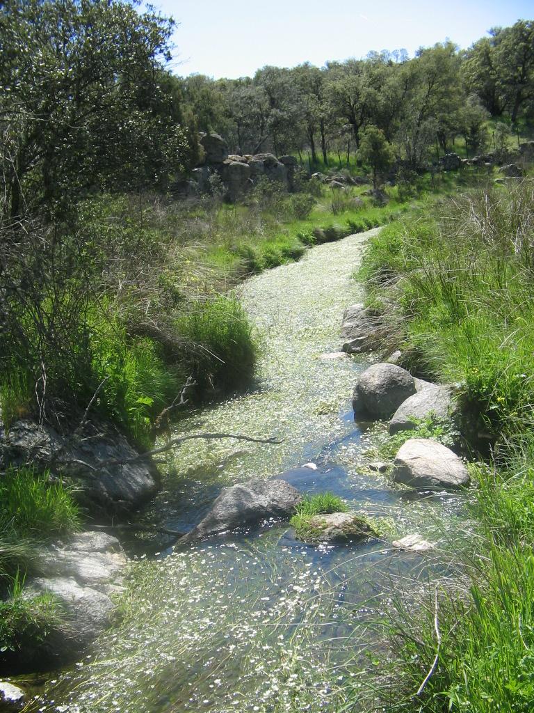 Espacios en transformación: una historia de los arroyos urbanos como patrimonio natural de la Zona Metropolitana de Guadalajara, México