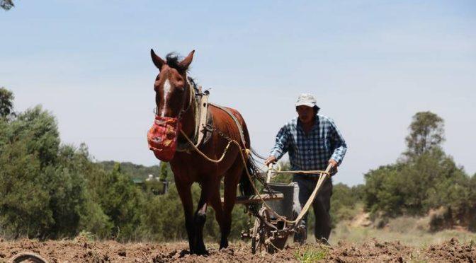 Michoacán: Afecta sequía 66 mil has de cultivos: Sedrua (El Sol de Morelia)