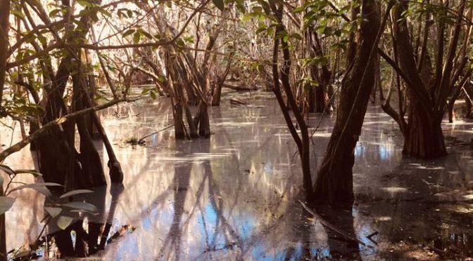Yucatán: Toneladas de sustancias químicas contaminan el acuífero de la península (El Sol de México)