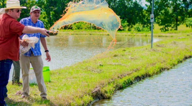 República de el Salvador: Primera granja acuícola agroecológica (Food News)