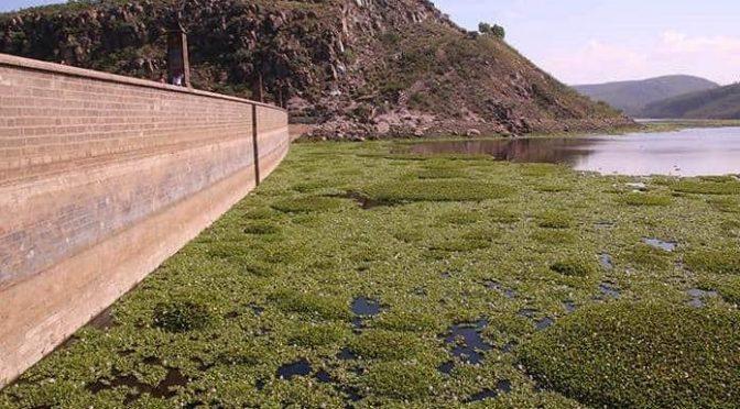 San Luis Potosí: Agua de presa San José, sólo hasta diciembre (Pulso)