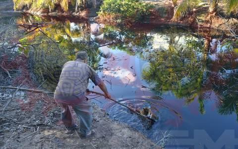 Tabasco: Tragedia ecológica en costas de Paraíso por derrame de combustible (El Sol de México)