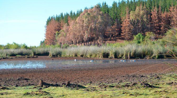 Transición hídrica: el futuro del agua en Chile (El Ágora)