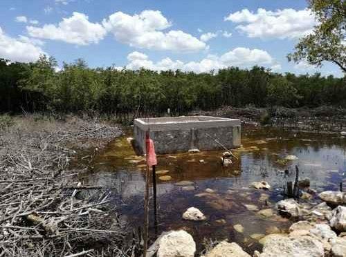 Yucatán: Arrasan con más de 2 mil m2 de manglares en reserva (La Jornada)