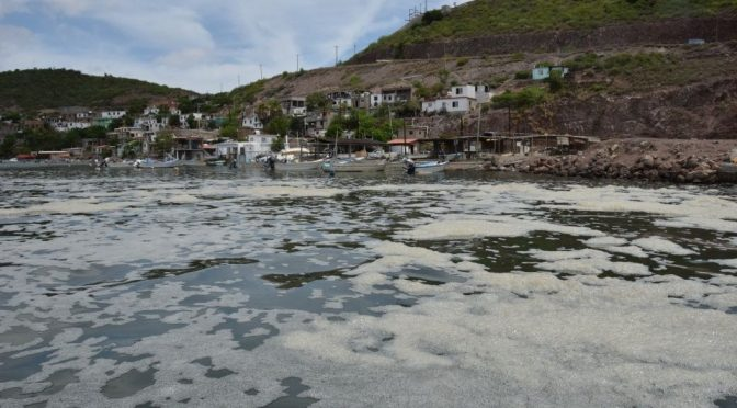 Sinaloa: Sector Naval, sin intervenir en contaminación de Ohuira (Debate)