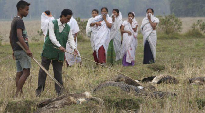 India: Encuentran centenares de aves muertas alrededor de un lago (TN 23)