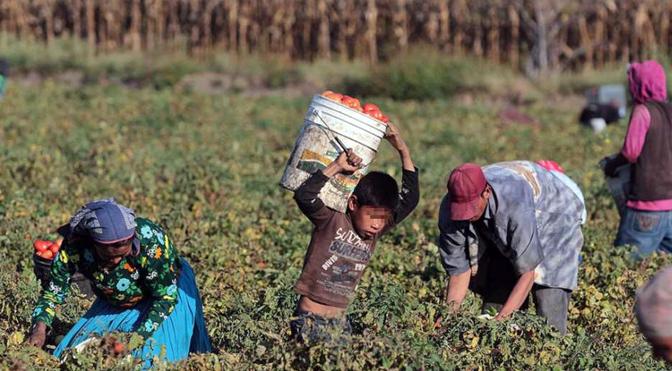 Sonora: Afectan lluvias a jornaleros agrícolas; dejan de trabajar y pierden (Opinión Sonora)