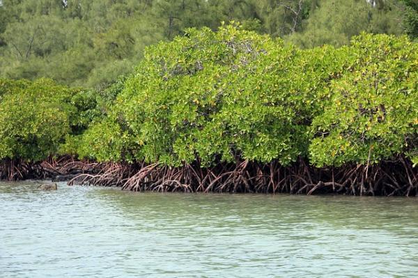 Macroinvertebrados asociados a manglar como indicadores de impacto en el hábitat de las bahías de Ohuira y topolobambo, Sinaloa, México