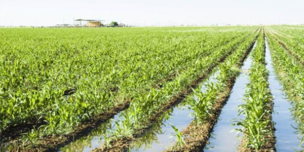 Tamaulipas: Ciclo agrícola en peligro por bajo nivel de presas (Milenio)