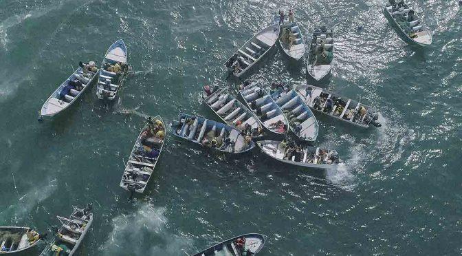 CDMX: Como nunca, desborda la pesca ilegal de Totoaba en hábitat de vaquita marina ( Excelsior)