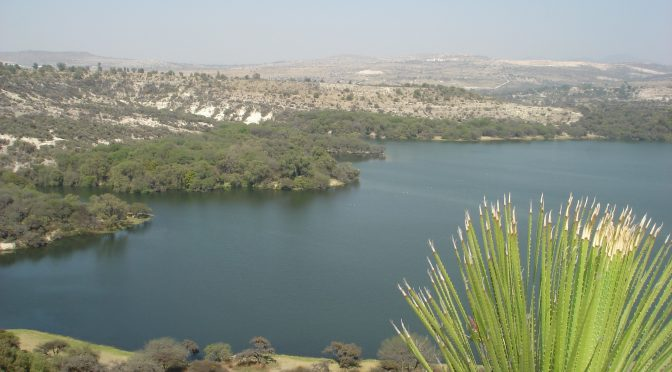 Hidalgo: Rechazan que deceso de aves sea por agua contaminada (Criterio)