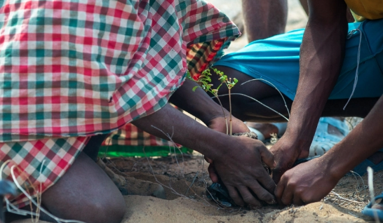 México: Manglares, una súper solución contra el cambio climático (ONU)