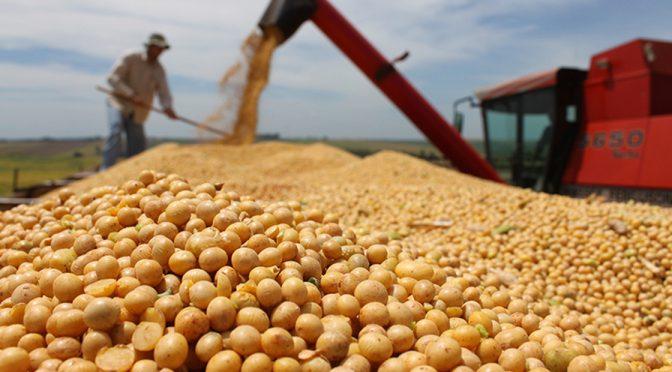 Guanajuatenses no podrán cultivar granos en 2020 por escasez de agua (Periódico Correo)
