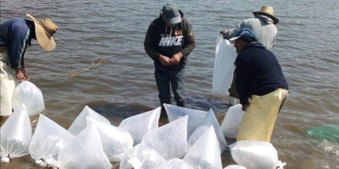 Hidalgo: Introducen 210 mil crías de peces en presa Requena, venden Tilapia a Guanajuato (Inforural)