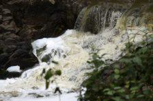 Veracruz: Lamentable la contaminación por aguas negras en ríos: Fundación (Vanguardia)