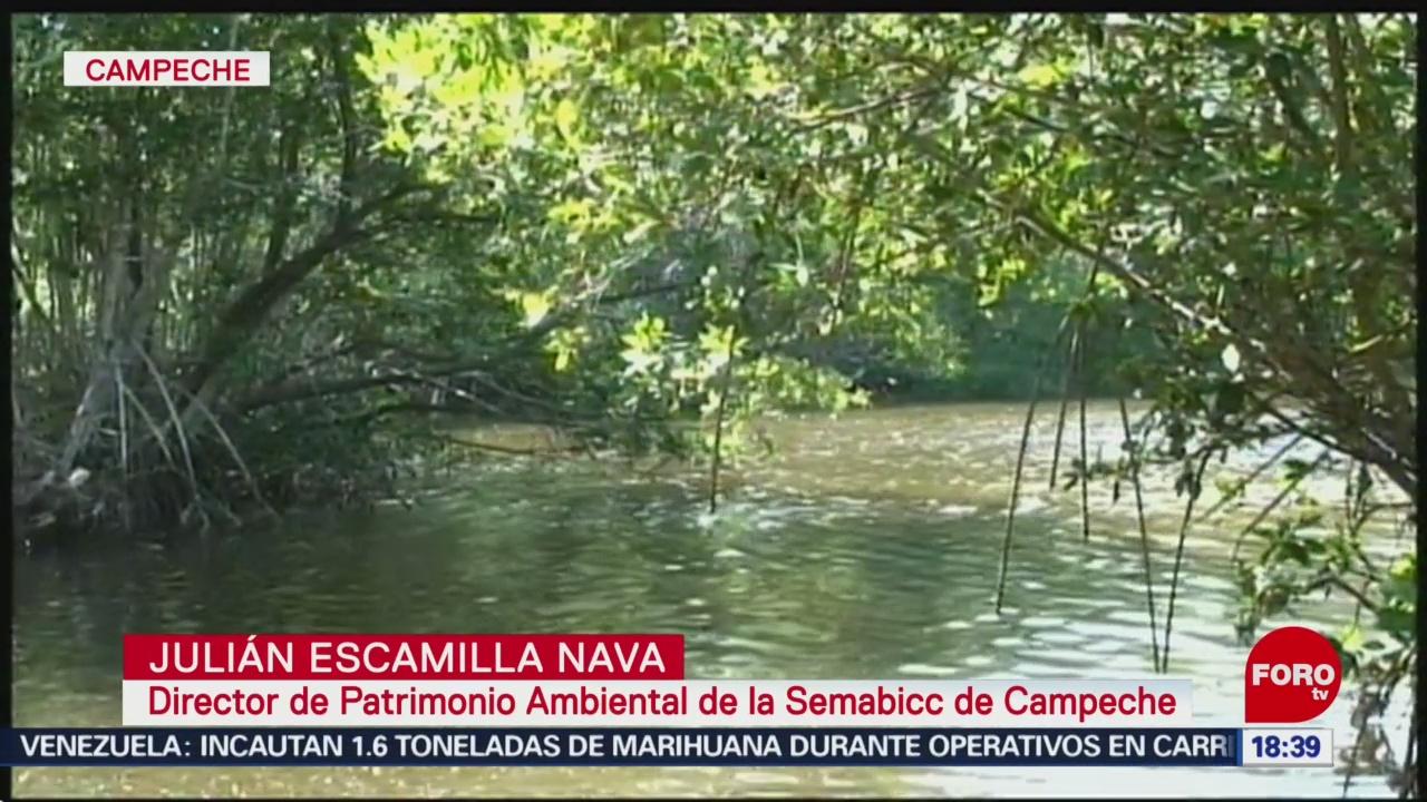 Campeche busca proteger corredor biológico Báalam´Beh (televisa.news)