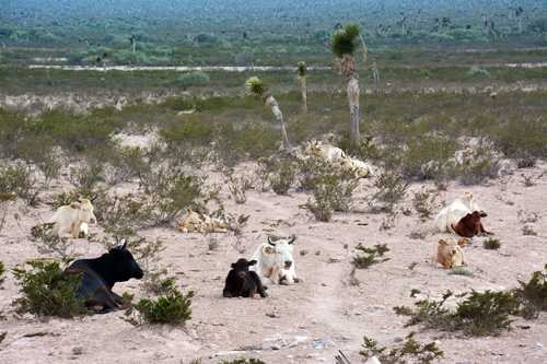 México: Sequía del 2019 devastó más de 60% del país: Sader (La Jornada)