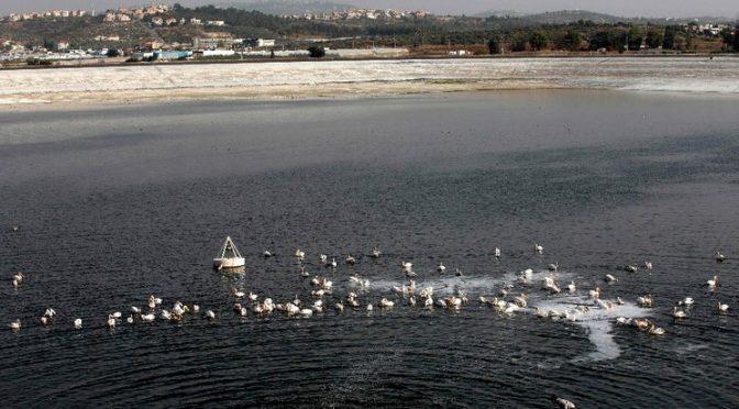 Madrid: Falta de oxígeno en los océanos amenaza a especies marinas (La Jornada)