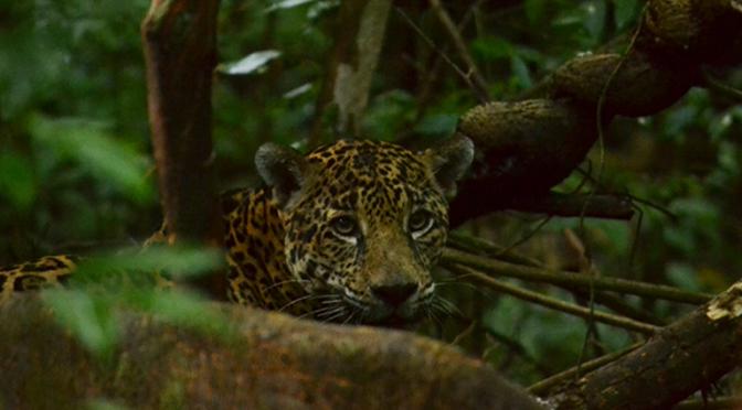 Chiapas: Reserva de Montes Azules presenta explotación no planificada (El Heraldo de Chiapas)