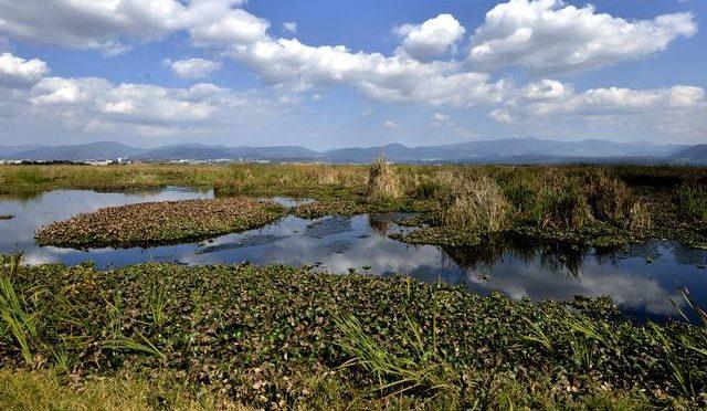 Toluca: Contaminación acorrala al ajolote de Lerma (El Sol)