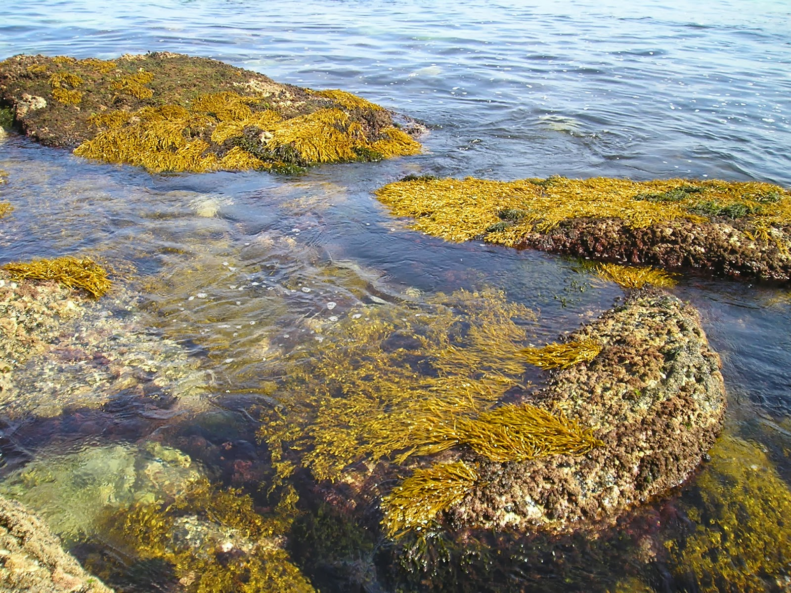 Diagnosis prospectiva sobre la diversidad de diatomeas epilíticas en la laguna Bacalar, Quintana Roo, México