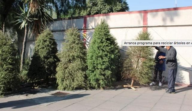 CDMX: Arranca programa para reciclar árboles en Azcapotzalco (El Universal)