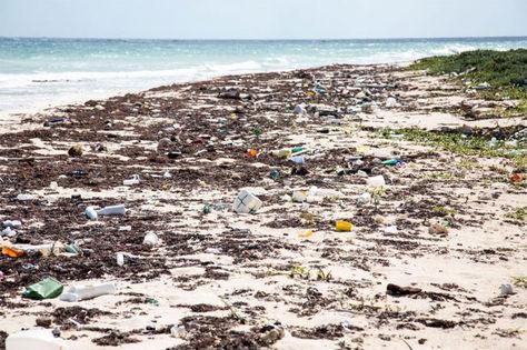 Japón estudiará la contaminación de microplásticos en su costa (Infobae)