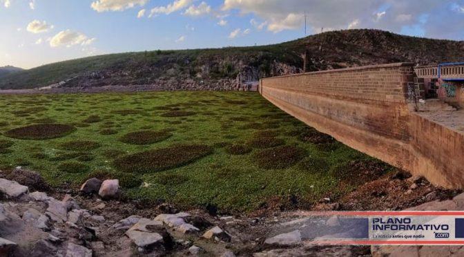 San Luis Potosí: Presa San José, el problema es más que lirio acuático (Plano Informativo)