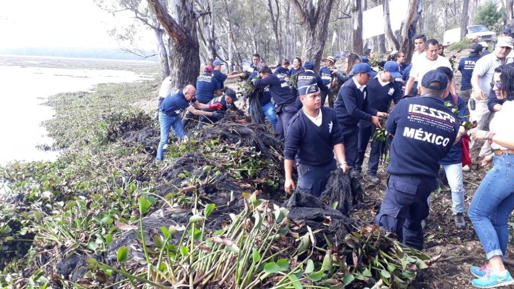 Michoacán: limpiarán presa Cointzio; van por retirar lirio en 80 hectáreas (Quadratín Michoacán)