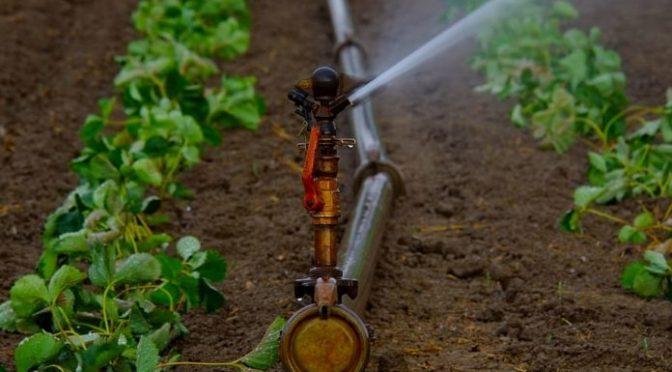CDMX: Reutilizar las aguas residuales en la agricultura (Ambientum)