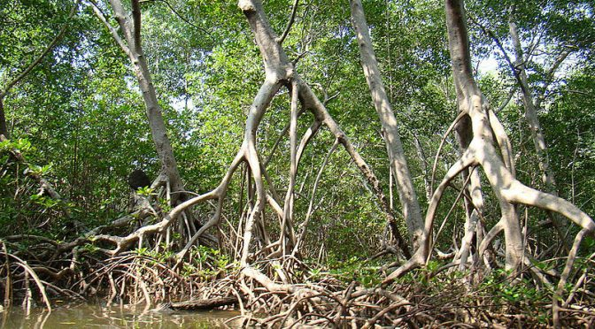 Quintana Roo: destruyen mangle y palma chit cerca de la laguna Chacmochuch (Sipse)