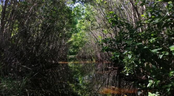 Quintana Roo: Proponen ley para proteger los cenotes (La Jornada Maya)