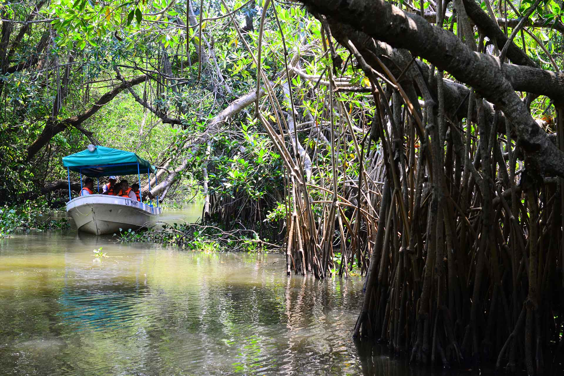 Vegetación de humedales en áreas de turismo de aventura en la zona Maya de México