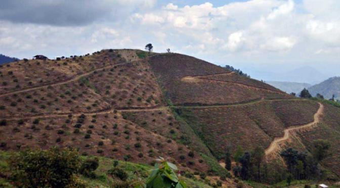 Uruapan: Huertas ilegales de aguacate arrasan con agua y salud de michoacanos (El Demócrata)
