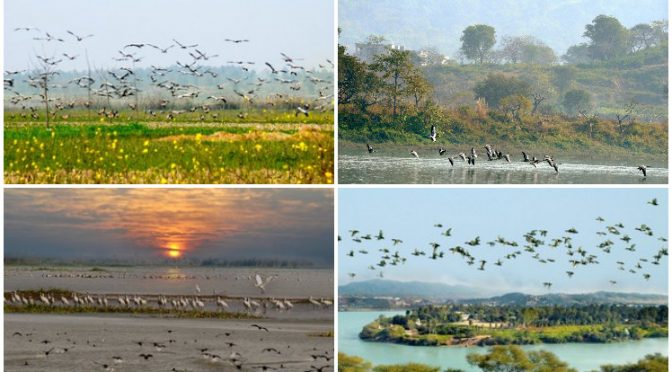 Otros 10 humedales en India declarados de importancia internacional (Prensa Latina)