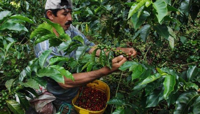 Veracruz: Rechaza comercializadora de café AMSA petición del sector de subir su precio y responsabilidad ambiental (La Jornada de Veracruz)