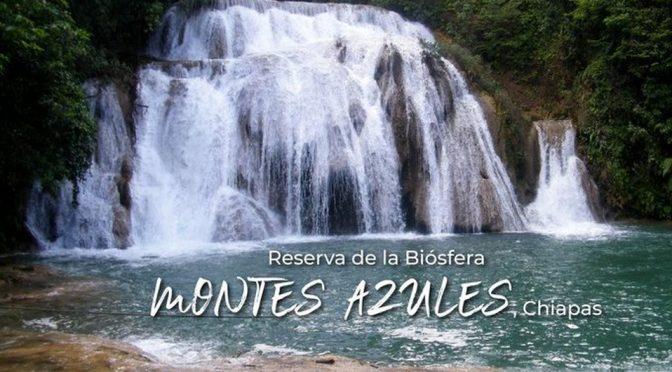 Chiapas: Piden ONG's salvaguardar reserva Montes Azules (Milenio)